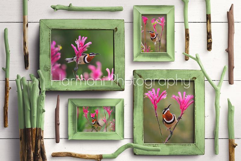 Green Wooden Frames - Mockup