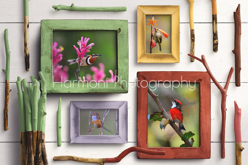 Wooden Frames Multicoloured Mockup