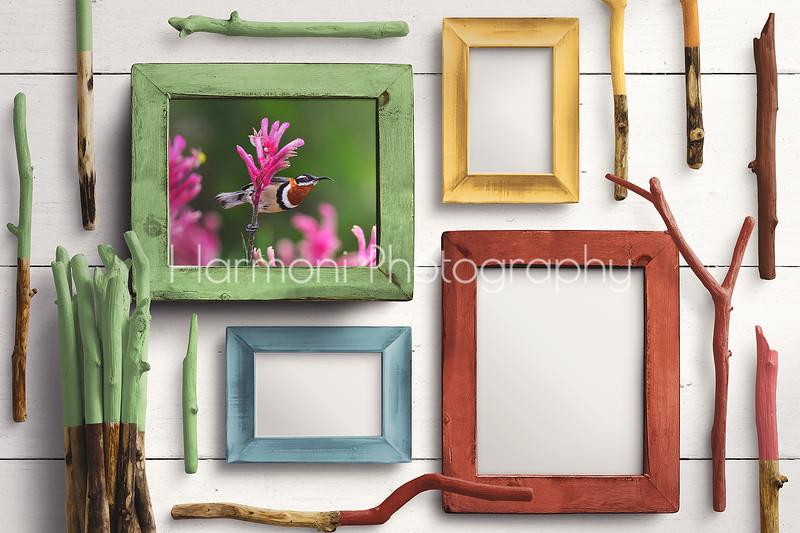 Western Spinebill - Wooden Frames Mockup
