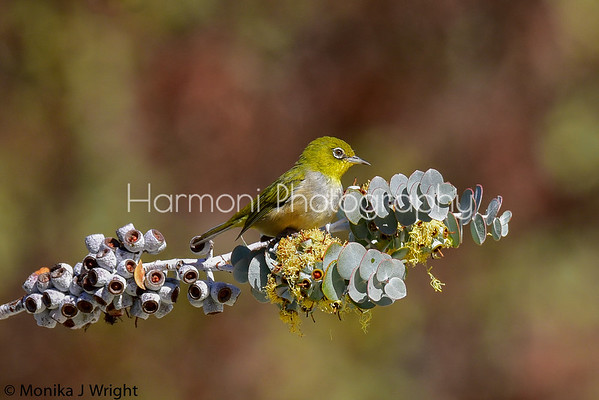 Harmoni Photography Other Varieties