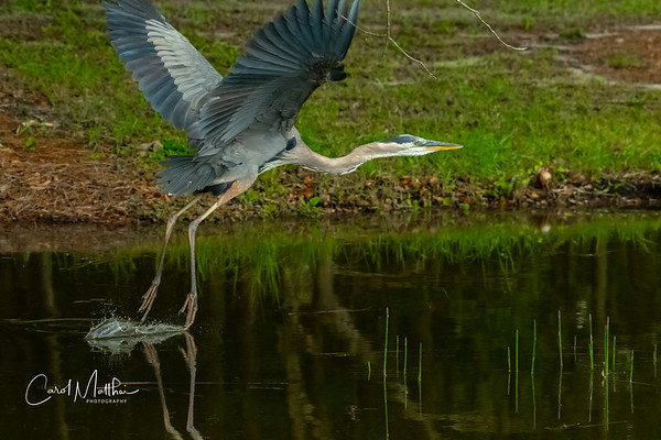 GBH scraping the surface