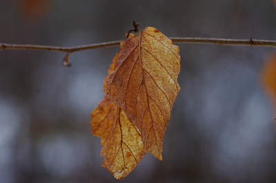 Bokeh and the Orange Leaves