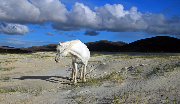 White horse, Luskentyre
