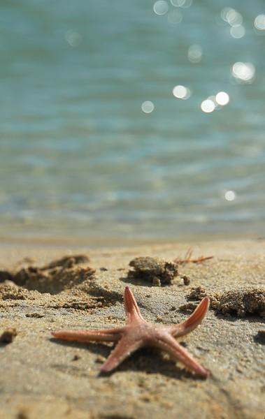 Starfish at Luskentyre