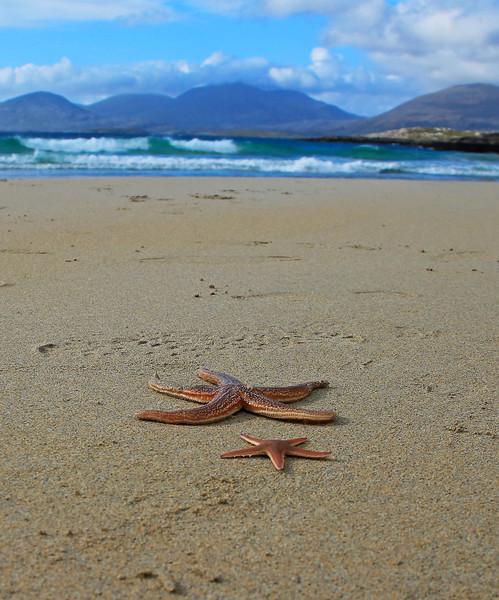 Starfish on Rosamol Beach, Luskentyre