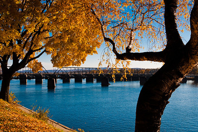 Autumn trees along the Susquehanna River in Harrisburg, PA