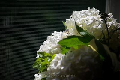 Toni_Jamin_Wedding023