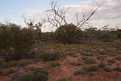 mala enclosure. Only grazing mammals present are Mala.
