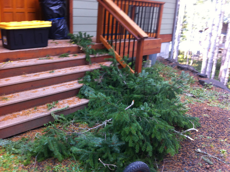Branches that fell from the tree and landed east of the ridge vent.