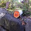 Broken tree bits on north wall.