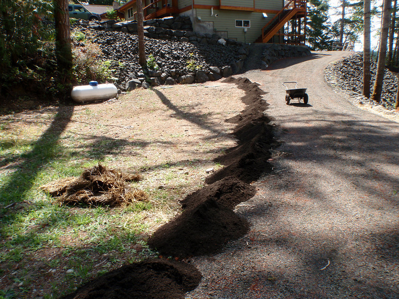 """along the side of I-5 again.  This was extra dirt after putting 4+"""" of topsoil in the back yard."""