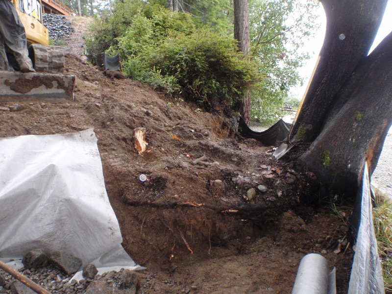 A few minor scrapes on the madrona root, but all, in all, the guys have worked around it very gently.