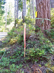 New power pole stake 7-8-08