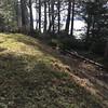 Yard dips 6-8' to a narrow  path that runs along the cliff
