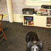 kitchen with rubber gym mats and Dooger Dog Dallas