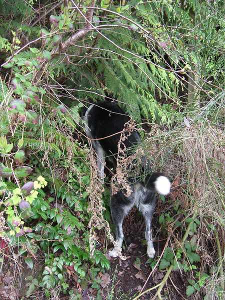 11 - Riley climbing an embankment