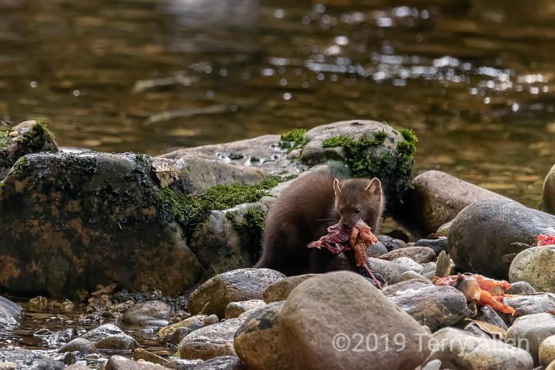 Mouthful of salmon