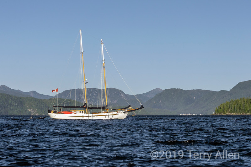 Canadian schooner 'Maple Leaf' in Whale Channel, Hartley Bay, British Colulmbia