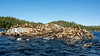 Large colony of Steller's sea lions on the rocks, near Campania Island, British Columbia