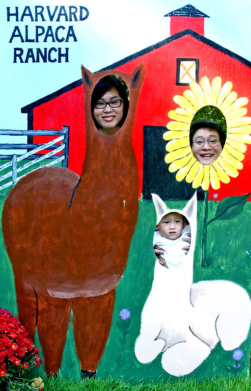 . Here posing in the picture poster board is this young family from Littleton, L-R, Dong Li, Jackson Li, 20 months and Jack Li at the first year open house and tour of the Harvard Alpaca Ranch. SUN Photo by David H. Brow
