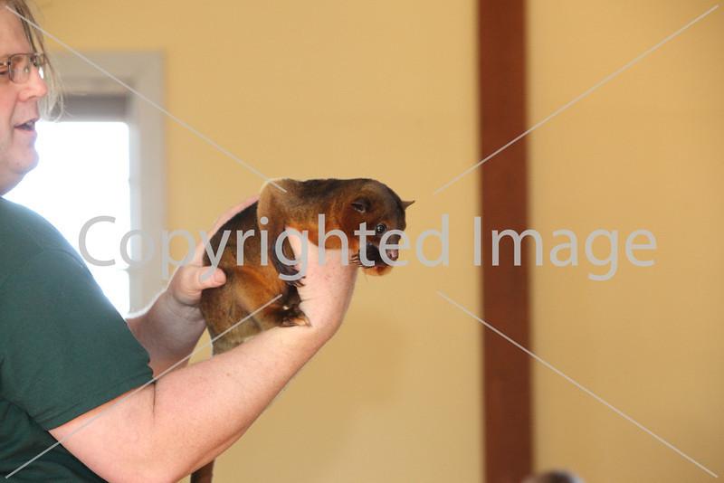 animal adv_6909