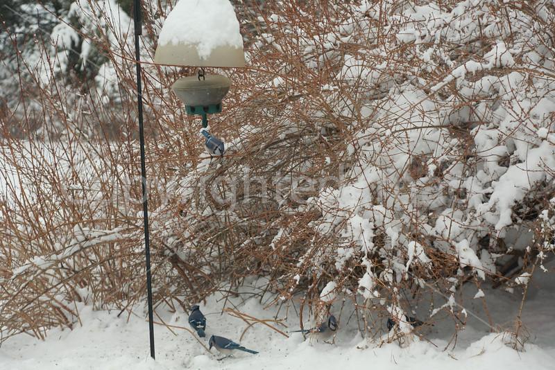 2015_snow_2992