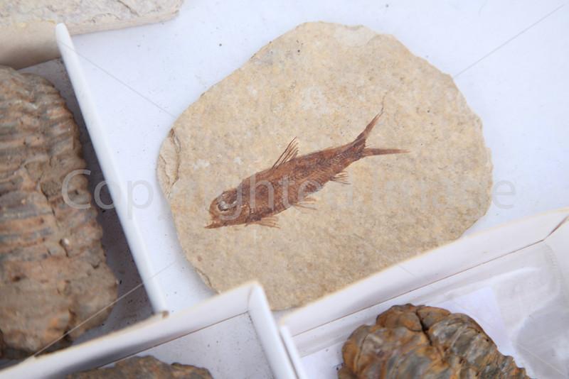 Flea Mkt 2012_5172