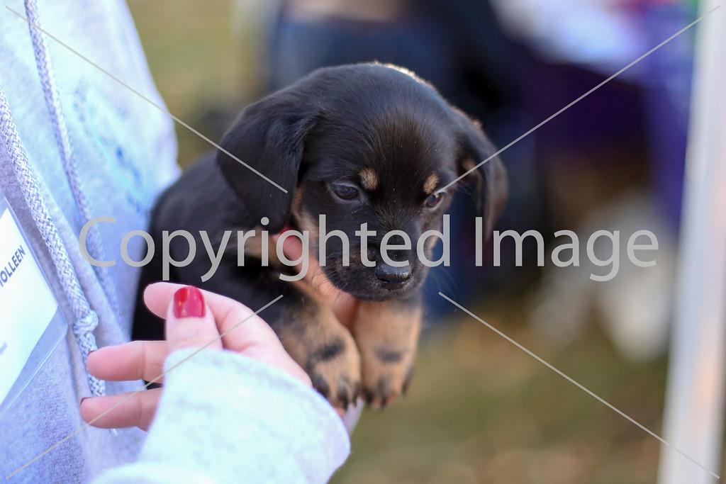 DogRescue15-4785