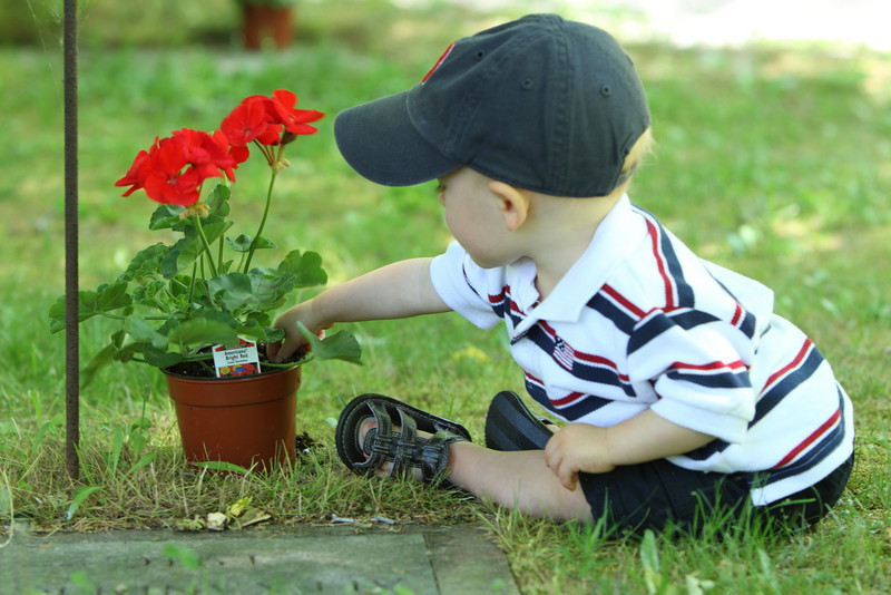 One-year old Dylan Gibbons helps out with placing geraniums on veterans' graves.