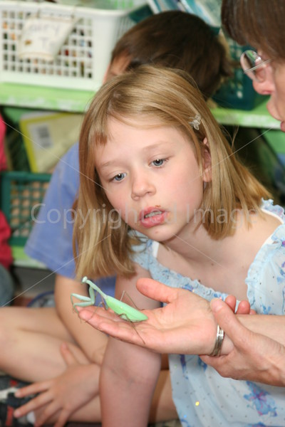 Abigail Pacl checks out a Praying Mantis during a visit by the Bug Lady to the second grade at the elementary school. (Photo  by Lisa Aciukewicz)