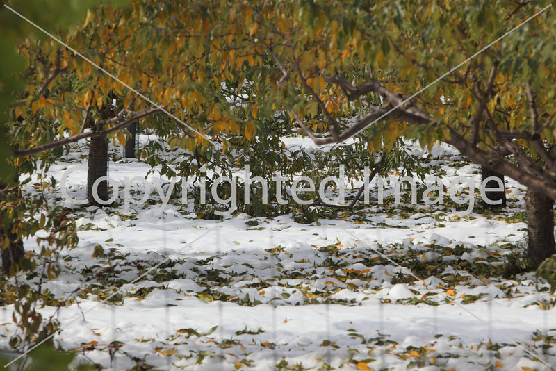 snow_8785