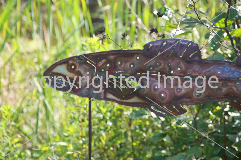 Frog Pond_9790