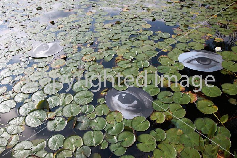 Frog Pond_9789