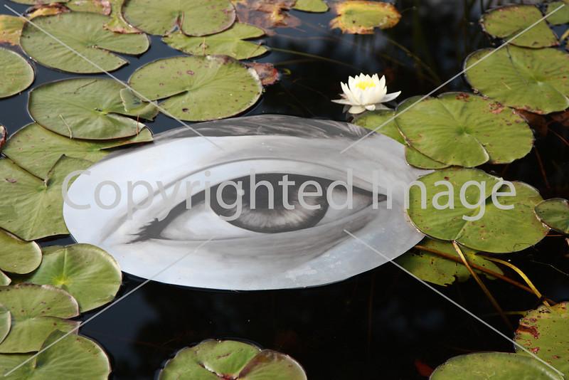 Frog Pond_9788