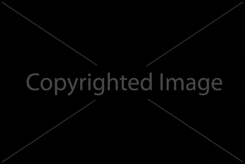 2015_Tree Lighting_6702