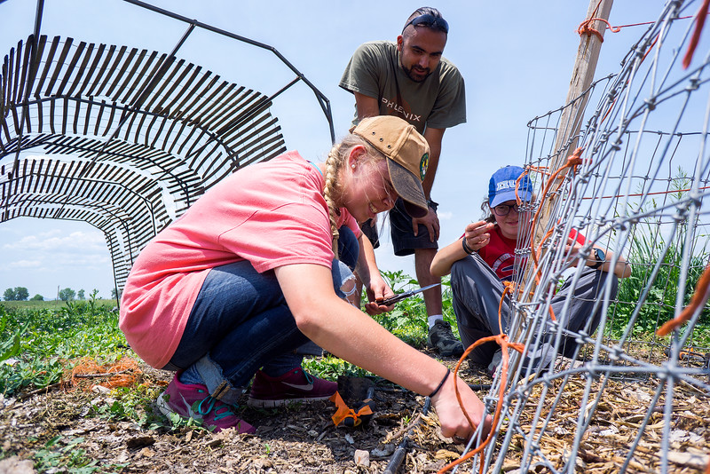 Tim Rumsey watches as his volunteers for the day, Lilah Anderson, left, and Julia Gromm plant beans along a fence Tuesday June 21, 2016. Harvest Farm receives volunteer helpers from churches around the area. <br /> <br /> Photo by Michael Ortiz/ Loveland Reporter-Herald