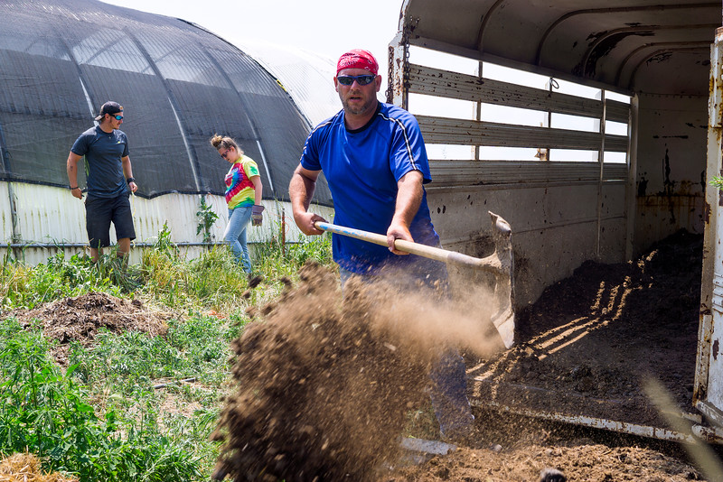 Joe Sutton scoops dirt out of a trailer to be used for composting Tuesday June 21, 2016 at Harvest Farm. The program participants were recently taught how to compost with worms from a local farmer and have begun implementing worm composting by digging up their own worms.<br /> <br /> Photo by Michael Ortiz/ Loveland reporter-Herald