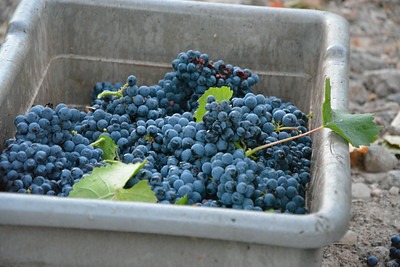 Beautiful bin - Napa Valley Harvest 2014