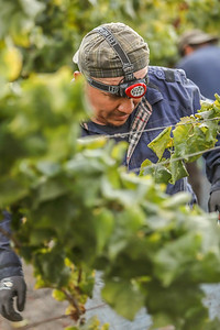 Photo by Jon McPherson for Napa Valley Vintners