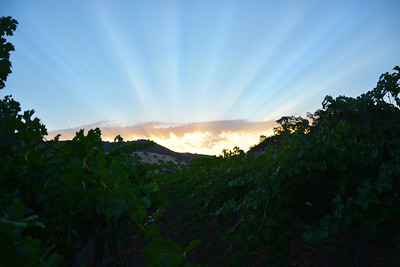 An auspicious start to the day - Napa Valley Harvest 2014