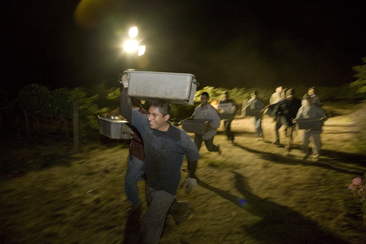 Night harvesting of Chardonnay in the Carneros region of Napa Valley Photo by Jason Tinacci / Napa Valley Vintners