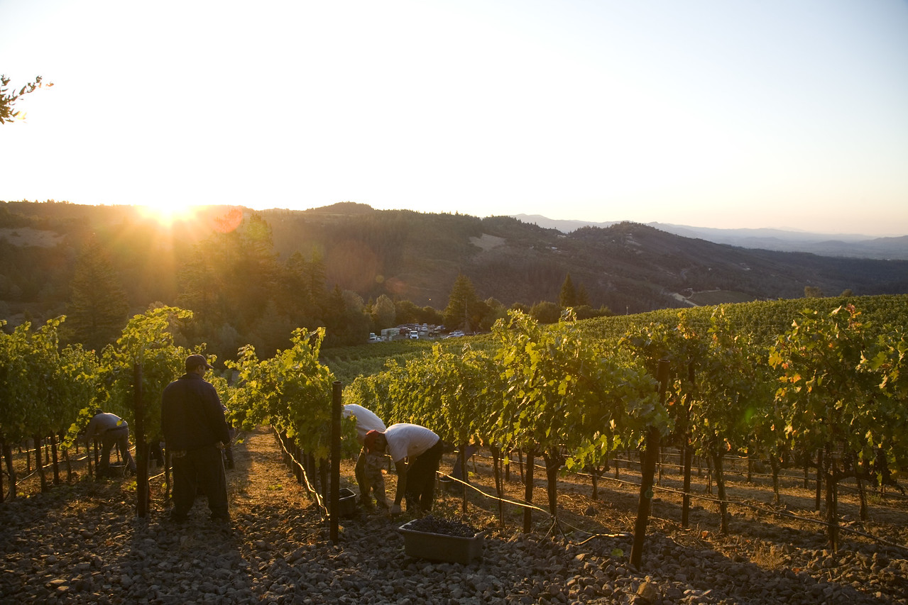 Dawn greets an early-morning picking crew. Photo by Jason Tinacci / Napa Valley Vintners