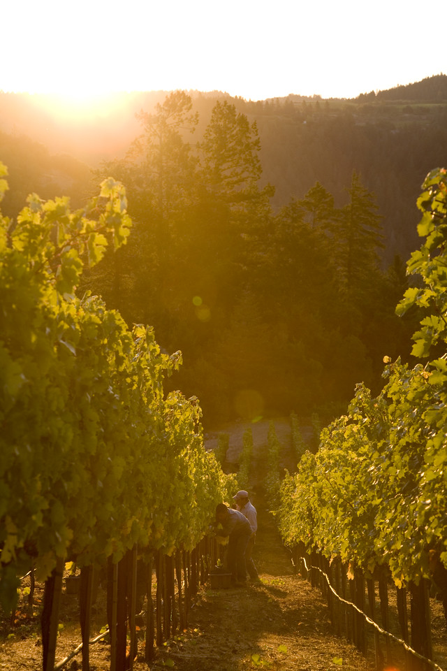 Early morning on Howell Mountain. Photo by Jason Tinacci / Napa Valley Vintners
