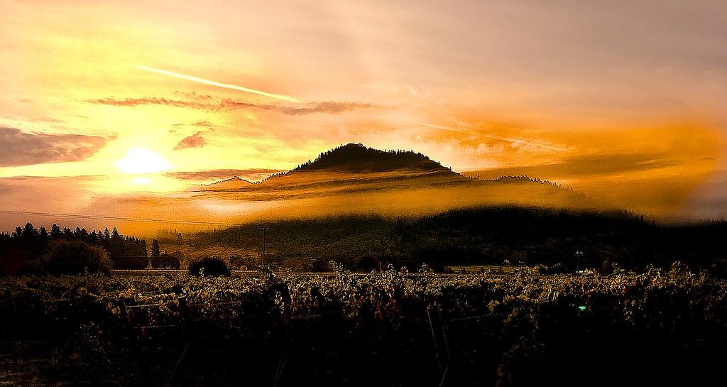 Harvest Dawn at Troon Vineyard