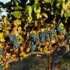 Troon Vineyard Applegate Valley Heritage Cabernet Sauvignon