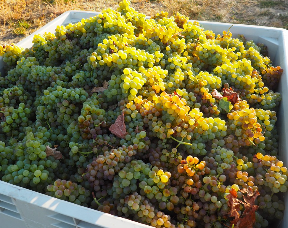 Troon Vineyard Estate Vermentino