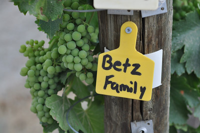 Row markers at Red Willow Vineyards.
