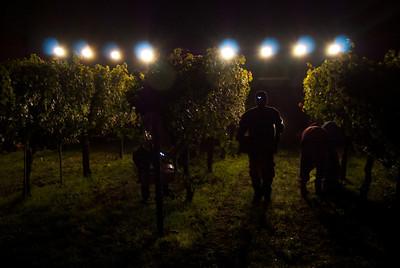 Harvests Napa Valley 2009 to 2015 Cornerstone Cellars
