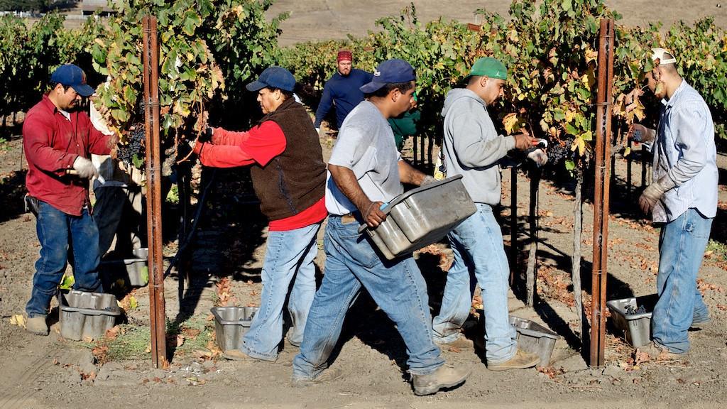 Harvest Napa Valley 2010