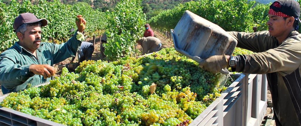 Harvest Napa Valley 2009 Cornerstone Cellars